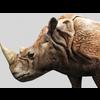 16 01 50 123 rhino 9 4