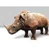 16 01 50 534 rhino 10 4