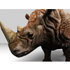 16 01 51 83 rhino 4 4