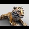16 01 53 178 tiger 1 4