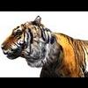 16 01 53 617 tiger 2 4