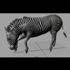 16 02 02 626 zebra 3 4