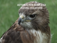 Autorig : bird and flying creature for Maya 1.4.0 (maya script)