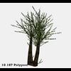 16 56 26 559 tree promo 6 4