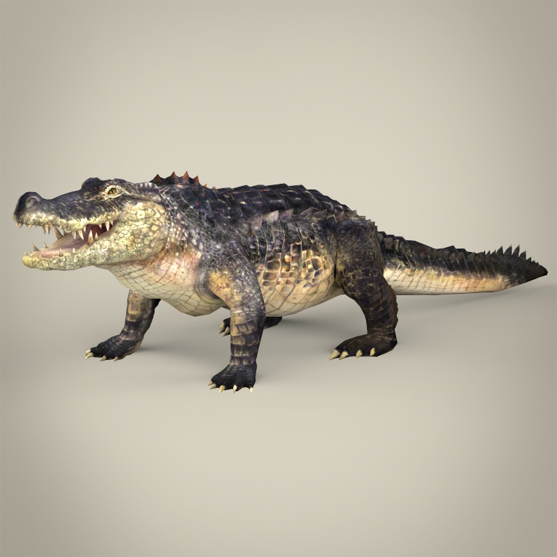 how to make a clay model of crocodile