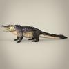 16 59 39 578 realistic crocodile 04 4