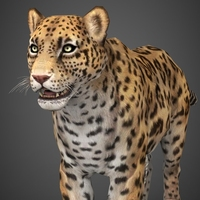 Low Poly Cheetah 3D Model