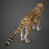 16 59 45 121 low poly cheetah 06 4