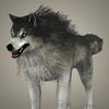17 02 21 143 brown wolf 02 4