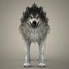17 02 21 521 brown wolf 03 4