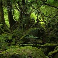 Floresta fundo 1920x2560 cover