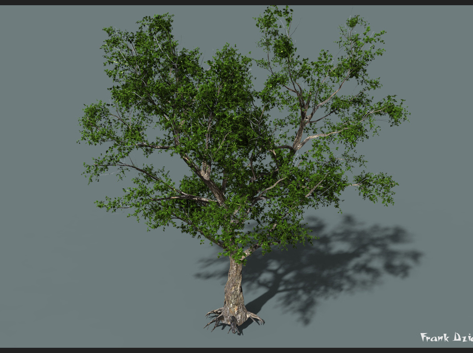 Bcr tree v001 show