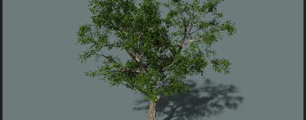 Bcr tree v001 wide