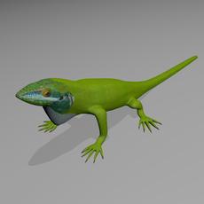 Anole lizard 3D Model