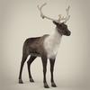 13 20 24 956 realistic reindeer 07 4