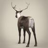13 20 26 319 realistic reindeer 05 4