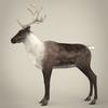 13 20 26 798 realistic reindeer 04 4
