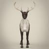 13 20 27 484 realistic reindeer 03 4