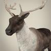 13 20 27 884 realistic reindeer 02 4