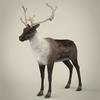 13 20 28 280 realistic reindeer 01 4