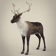Realistic Reindeer 3D Model