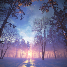 Forest Winter Scene 3D Model