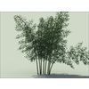 14 09 16 241 bamboo 01 1 4