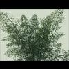 14 09 16 663 bamboo 01 2 4