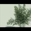 14 09 17 123 bamboo 01 3 4