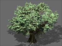 Banyan Tee 01 3D Model