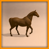 14 56 55 111 horse ani 0021 4