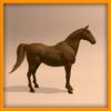 15 01 41 580 horse piccam 0000 4