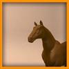 15 01 43 729 horse pic 0000 4