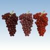 15 34 48 836 grapesr 01 4