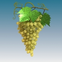 Grapes Cluster Green 3D Model