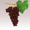 15 34 57 463 grapesr 02 4