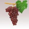 15 34 57 861 grapesr 03 4