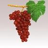 15 34 58 246 grapesr 04 4