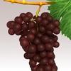15 34 58 780 grapesr 05 4