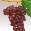 15 34 59 264 grapesr 06 4