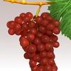 15 34 59 865 grapesr 07 4