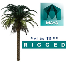 HD Palm Tree rig for Maya 1.0.0