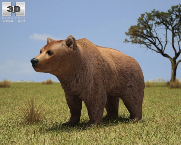 Brown Bear 3D Model