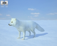 Arctic Fox 3D Model