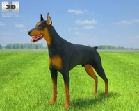 Doberman Pinscher 3D Model