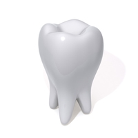 Tooth 3D Model