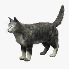 Domestic Cat FUR 3D Model