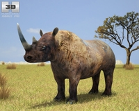 Black Rhinoceros 3D Model