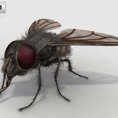 Housefly High Detailed Rigged 3D Model