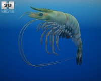 Giant Tiger Prawn 3D Model